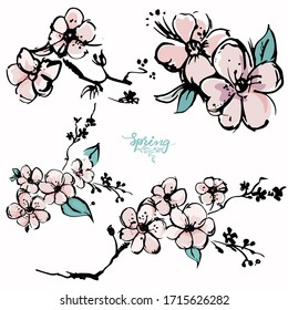 Apricot blossom hand drawn sketch, Vector illustration