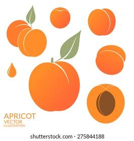 Apricot. Fresh fruit on white background. Vector illustration