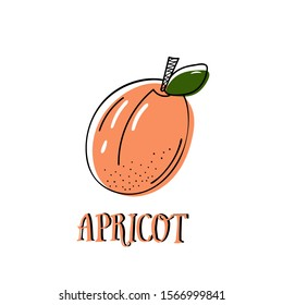 """apricot fruit vector sketching. Bright picture of ripe apricot. lettering of the word """"apricot"""""""
