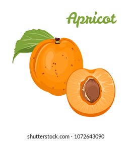 Apricot isolated on white background. Vector illustration of ripe fruit with green leaf in flat style.