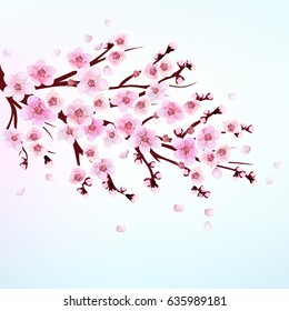 фотообои Apricot. Japan Cherry. Branch with Blooming Flowers. Vector illustration. Card, Poster, Flyer. Spring. Plum.