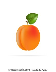 Apricot on a white background. Vector illustration, cartoon style