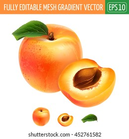 Apricot on white background. Vector illustration