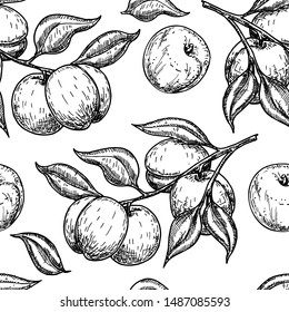 Apricot seamless pattern. Hand drawn fruit, branch and sliced pieces. Food engraved style illustration. Great for label, print, packaging, background. Detailed vegetarian sketch. Vector.