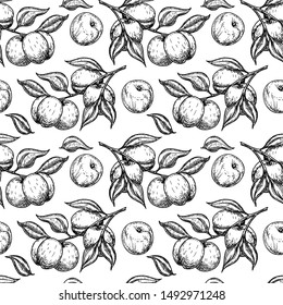 Apricot seamless pattern. Vector drawing. Hand drawn fruit, branch. Summer food engraved style illustration. Detailed vegetarian sketch. Great for label, print, packaging, background