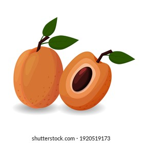 Apricots isolated on white background with pits
