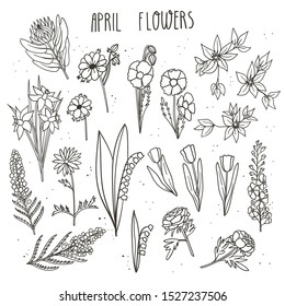 April flowers doodle hand drawn vector illustration. King protea, clematis, tulip, icelandic poppy, anemone, delphinium, daffodil, lilly the valley, mimosa acacia, anemone.