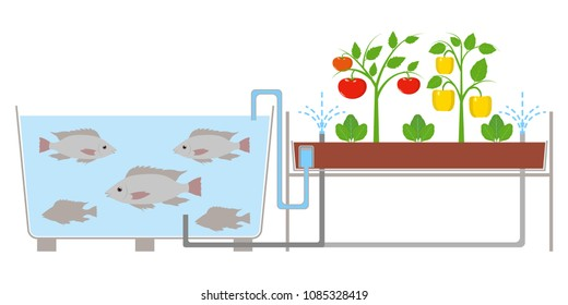 Aquaponic system agriculture technology vector illustration