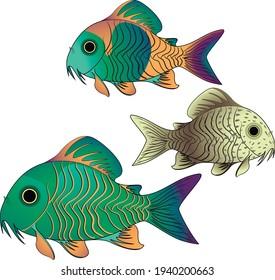 Aquarium fish tank fish. Catfish corydoras