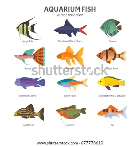 Aquarium Freshwater Fish Set Vector Illustration Stock Vector