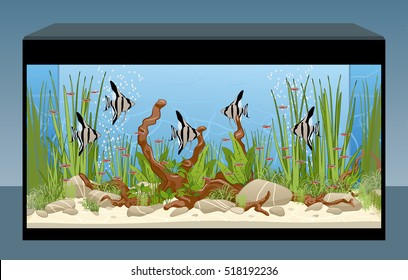 Aquarium. Natural aquarium with fish and plants Home aquarium. Vector illustration