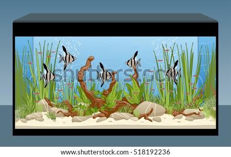 aquarium natural aquarium fish plants home stock vector royalty
