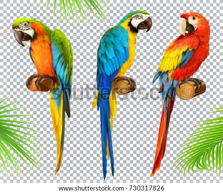 bb5690f458402 Ara Parrot Macaw Photo Realistic 3 D Stock Vector (Royalty Free ...