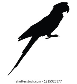 Ara parrot vector isolated on white background illustration. Sitting Ara realistic vector portrait. Beautiful Pet Parrot.