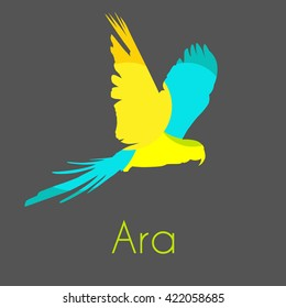 Ara parrot. Vector tropical bird on gray background.