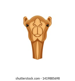 Arabian camel head cute close up portrait, dromedary one-humped camel vector illustration