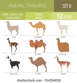 Arabian camel, llama, guanaco, alpaca suri breeds isolated icon set. Animal farming. Flat design. Vector illustration