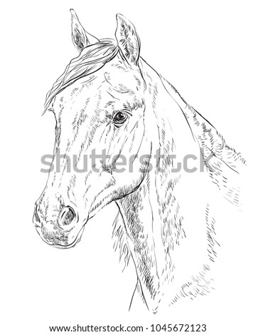 Arabian Horse Portrait Horse Head Profile Stock Vector Royalty Free