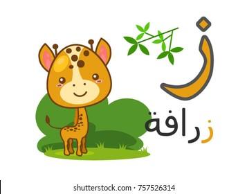 Arabic alphabet zaay with picture of giraffe