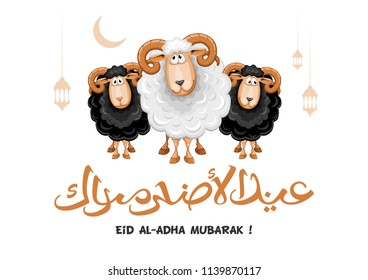 Arabic calligraphy text of Eid Al Adha Mubarak for the celebration of Muslim community festival. Greeting card with sacrificial sheeps. Vector illustration.