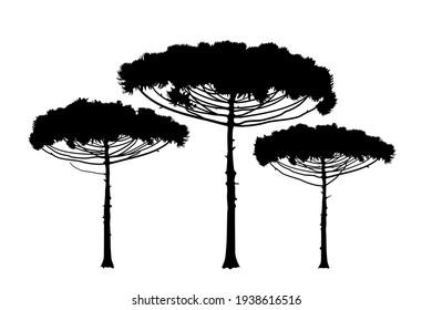 Araucaria araucana, Brazilian pine tree. Evergreen coniferous tree illustration icon, rush, texture. Trees outline on a white background. Vector.