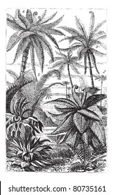 Arborescent Ferns during the Carboniferous Period, vintage engraved illustration. Trousset encyclopedia (1886 - 1891).