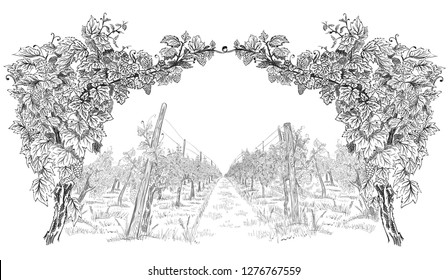Arc from of grapevine with landscape of vineyard. Hand drawn horizontal sketch vector background isolated on white