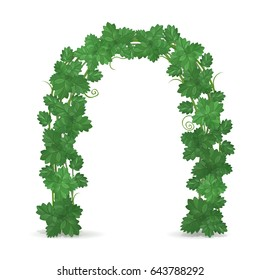 Arch of green foliage isolated on white background. Floral design. Wedding decoration. Vector illustration.
