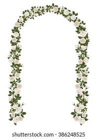 Arch of white climbing roses. Floral design. Wedding decoration. Vector illustration, detailed, isolated on white background.