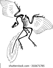 Archaeopteryx siemensii skeleton from Berlin