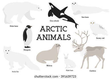 Arctic animals collection. Set of flat minimal vector illustrations of polar mammals and birds.Penguin, seal, hare, snowy owl, bear, orca whale, fox, caribou, walrus.Cute cards for memory game.Drawing