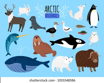 Arctic animals. Cute animal set of Arctic or Alaska vector illustration for education, penguin and polar bear, fox and reindeer isolated on white background