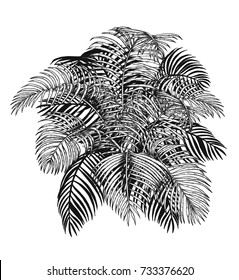 Areca palm sketch by hand drawing.Plam leaf vector on white background.Vector leaves art highly detailed in line art style.