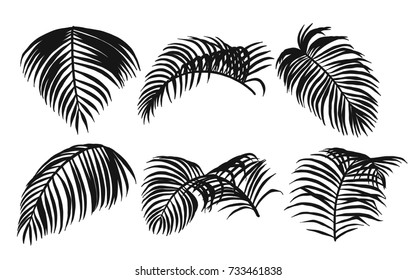 Areca palm sketch by hand drawing.Plam leaf vector set on white background.