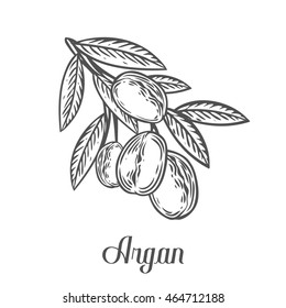 Argan nut oil, fruit, berry, leaf, branch, plant. Hand drawn engraved vector sketch etch illustration. Ingredient for hair and body care cream, lotion, treatment, moisture. Black on white background
