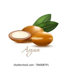 Argan Nuts and Leaves. Realistic Elements for Labels of Cosmetic Skin Care Product Design. Vector Isolated Illustration