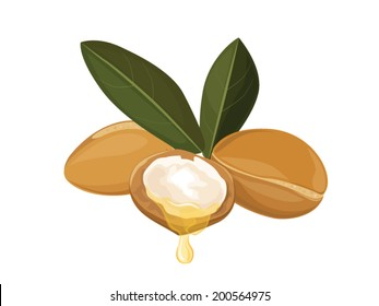 Argan oil, fruit vector image