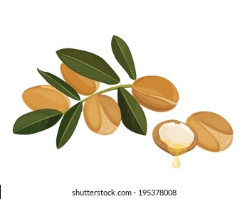 argan oil illustration ,vector