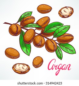 Argan tree branch with fruits. hand-drawn illustration