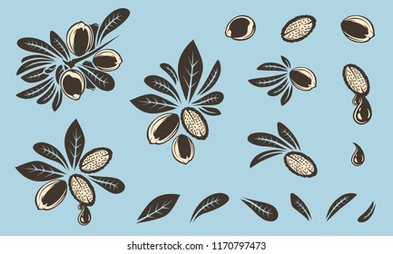 Argan vector drawing. Isolated vintage illustration of nut. Organic essential oil engraved style sketch. Beauty and spa, cosmetic ingredient. Great for label, poster, flyer, packaging design.