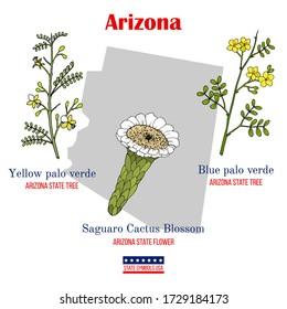 Arizona. Set of USA official state symbols. Vector hand drawn illustration