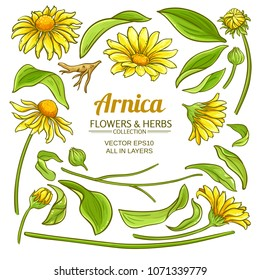 arnica elements vector set