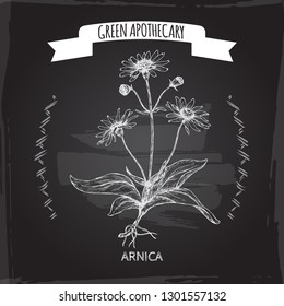 Arnica montana aka mountain tobacco or mountain arnica sketch on black. Green apothecary series. Great for traditional medicine, or gardening.