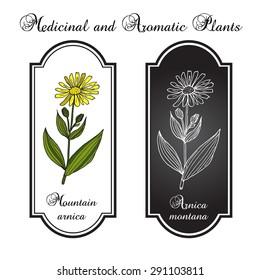 Arnica Montana. Medicinal plant