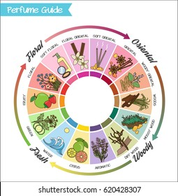 Aromatic guide wheel for perfume, scent and aroma infographic. Oriental, woody, fresh and flower essenses chart with examples of popular aroma notes.