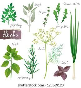 Aromatic herbs set