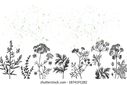 Aromatic herbs Tarragon Marjoram  Anise Dill Caraway Coriander. Fragrant herb. Manual graphics. Vector illustration.