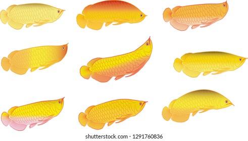 Arowana. Dragon fish. EPS 10. Vector illustration - Vector