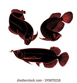 arowana fish drawing set vector illustration