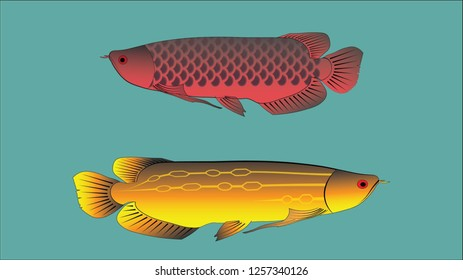 Arowana fish vector with ocean blue color background
